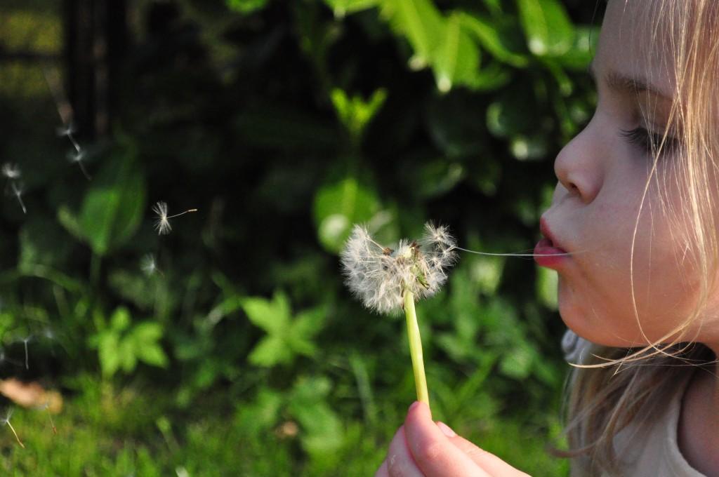 blowing-child-dandelion-790